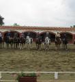 Gran fiesta de la Doma Vaquera en Castello de Ampurias